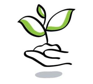 Pflanze wächst in einer Hand